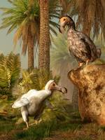 A pair of Dodo birds play a game of hide-and-seek
