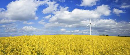 A wind turbine in a canola field against cloudy sk
