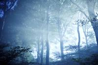 Misty rays of light pass through forest trees, Lis