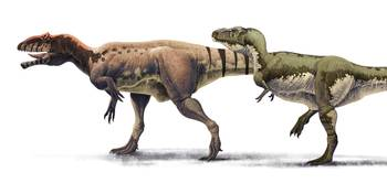 Body size comparison between Giganotosaurus caroli