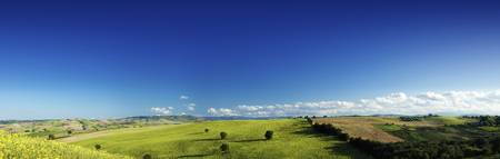 Panoramic view of a green field with lonely trees,