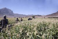 Soldiers walking through a wheat field in Afghanis