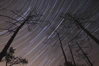 Star trails inside of a pine forest at Fonte-da-Te