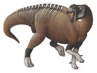 Muttaburrasaurus dinosaur from the Early Cretaceou