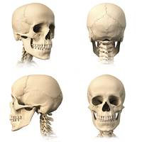 Anatomy of human skull from different angles