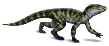 Protosuchus, an early Jurassic crocodylomorph