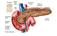 Anatomy of pancreas