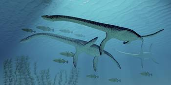 Three Plesiosaurus dinosaurs migrate with a school