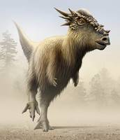 Stygimoloch, a genus of pachycephalosaurid from th