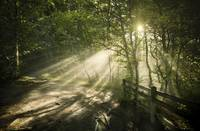 Sunbeams shining through a dark, misty forest, Lis