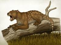 Thylacoleo carnifex, a marsupial and apex predator