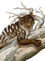 Thylacoleo, a marsupial lion from the Pleistocene