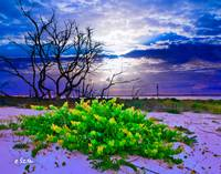 Green Landscape-Grape Vine-Blue Cloud Sunset Art
