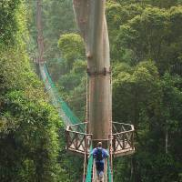 Danum Valley Canopy Walkway Art Prints & Posters by Jollence Lee