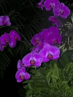 Purple Orchids and Fern