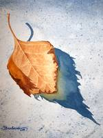 Leaf with Shadow