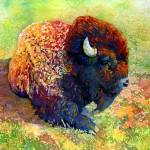 """Resting Bison"" by HaileyWatermedia"
