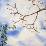 """Branches in the Sky"" by BarbaraPelizzoli"