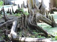 Roots and Stumps