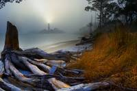 Lighthouse Fog Sea-Twisted Tree Roots Landscape