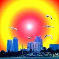 MIami Birds Art Prints & Posters by John Thompson