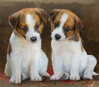 twin puppies portrait