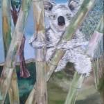 """Baby Koala"" by nemo1"