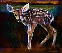 woodland at night baby deer standing
