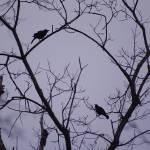"""""""birds"""" by erinlanzendorfer"""