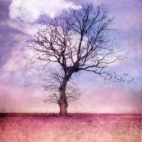 ATMOSPHERIC TREE - EARLY SPRING Art Prints & Posters by VIAINA ♛