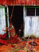 The Shed Out Back in Autumn