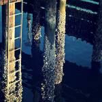 """sunlit pier"" by zacharyherrera"
