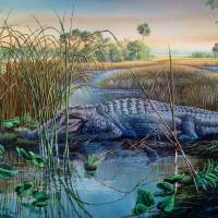 Okeechobee Marsh - Soul of a Alligator Art Prints & Posters by Daniel Butler