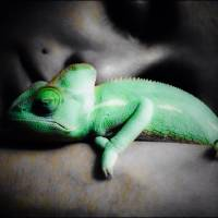 Sleeping chameleon Art Prints & Posters by Brandon Bushard