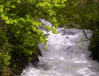 Whatcom Creek Rush
