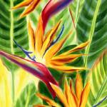 """Hawaiian Sunlit Birds of Paradise"" by JennyFloravita"