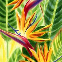 Hawaiian Sunlit Birds of Paradise Art Prints & Posters by Jenny Floravita