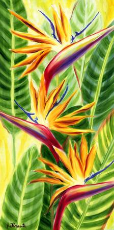 Hawaiian Sunlit Birds of Paradise