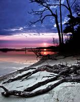 River-Sunset-Sandy-Bank-Exposed-Forest-Roots-Art