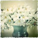 """""""White Blossoms, Image Aged"""" by Linde"""