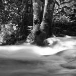 """Tree in Stream"" by aicramphoto"