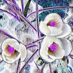 """""""Crocus Pastel Flower"""" by DNADINESCHWARTZ"""