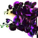 """""""Funky_Orchid"""" by MyiKandi"""