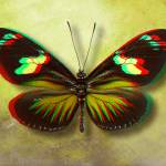 """3D Anaglyph-The Postman Butterfly"" by vincent-field_photography"