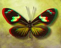 3D Anaglyph-The Postman Butterfly