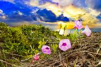 Morning Glory Sunrise-Purple Wildflower Landscape