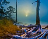 Sunlight through Dense Fog-Forest near the Sea Art