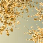 """""""vintage skies"""" by IrisLehnhardt"""