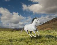 Galloping-White-Horse
