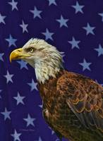 Eagle in the Starz